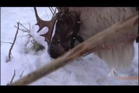 Катания на оленьих упряжках: «Калуга - Новогодняя столица России 2021»